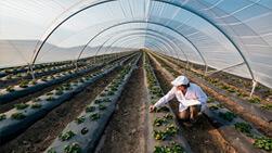 mallas y productos para el cultivo