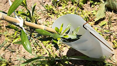 Protector árboles individual con varilla